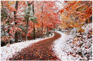 autumn_w_winter-398735