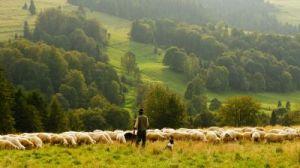 Shepherd - biegun-wschodni-vD3L-rN_qNw-unsplash