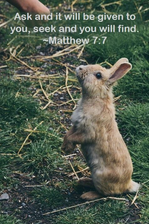 image of rabbit begging