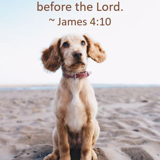 "obedient puppy, illustrating the text ""Humble Yourselves Before the Lord"" - James 4:10"